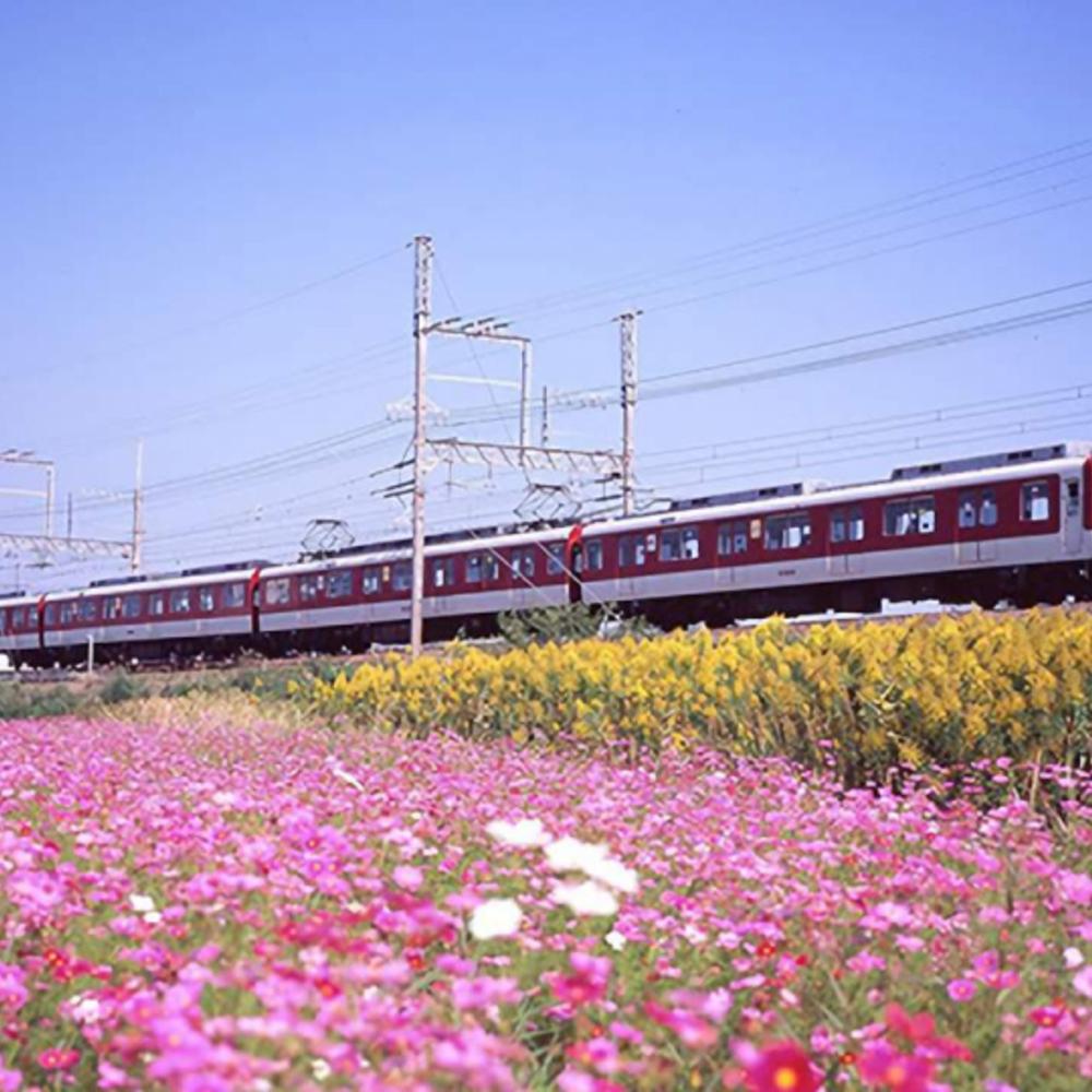 [일본] |오사카| 긴테츠 레일 패스 5일