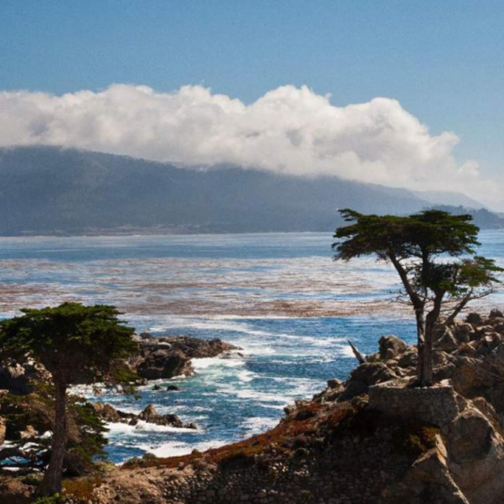 [미국] |샌프란시스코| 몬트레이 + 카멜 일일 투어 & 골든 게이트 베이 크루즈 픽업 서비스