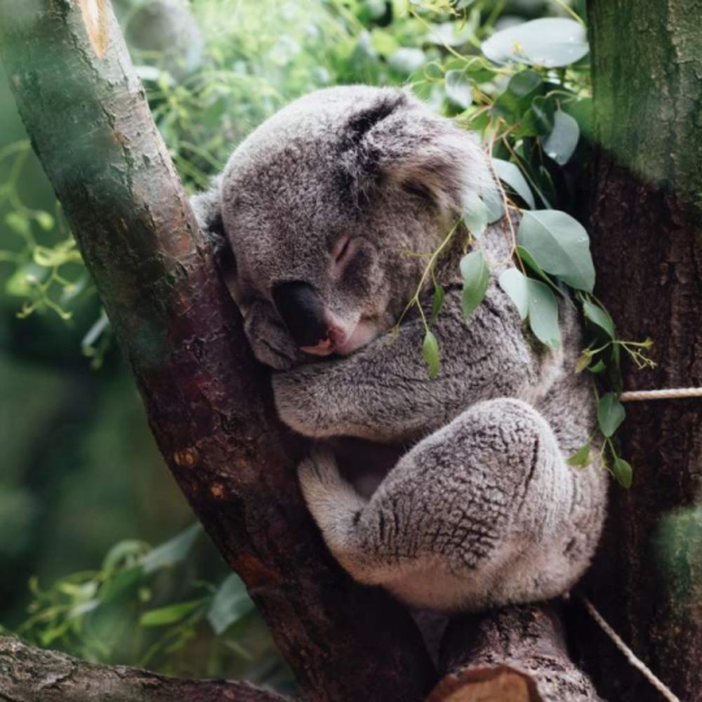 [호주] |시드니| 시드니 어트랙션 패스 3가지