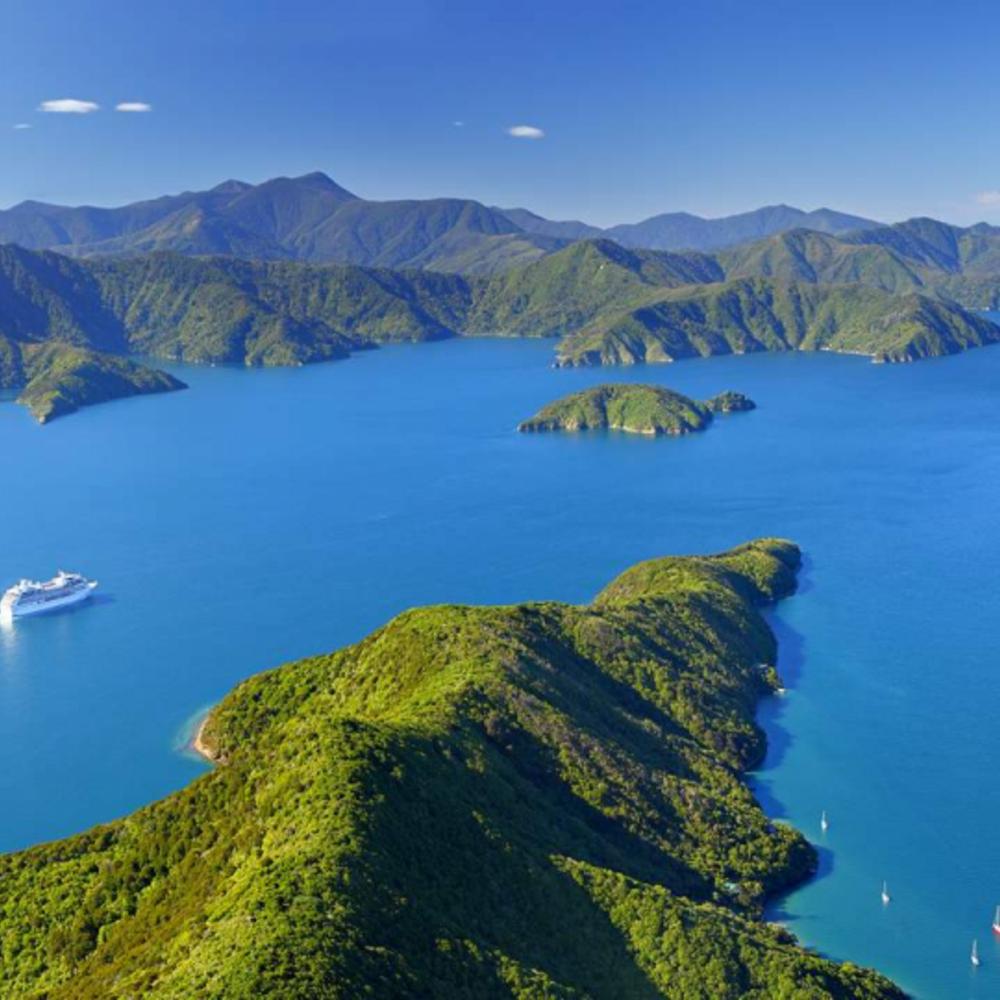[뉴질랜드] |말버러| 말버러 돌고래 수영 & 관람 체험 입장권