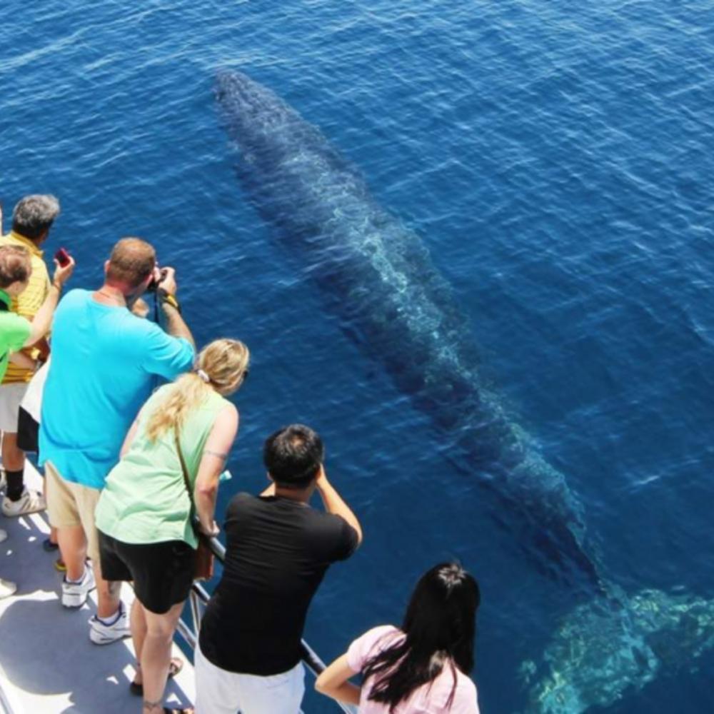 [뉴질랜드] |오클랜드| 오클랜드 고래 & 돌고래 와칭 크루즈 돌