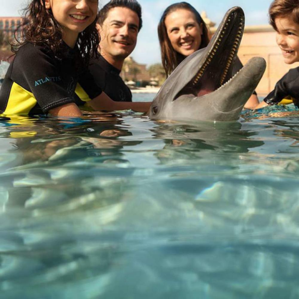 [아랍에미리트] |두바이| 돌고래 체험 & 아틀란티스 아쿠아벤쳐 워터파크 입장권 입장권