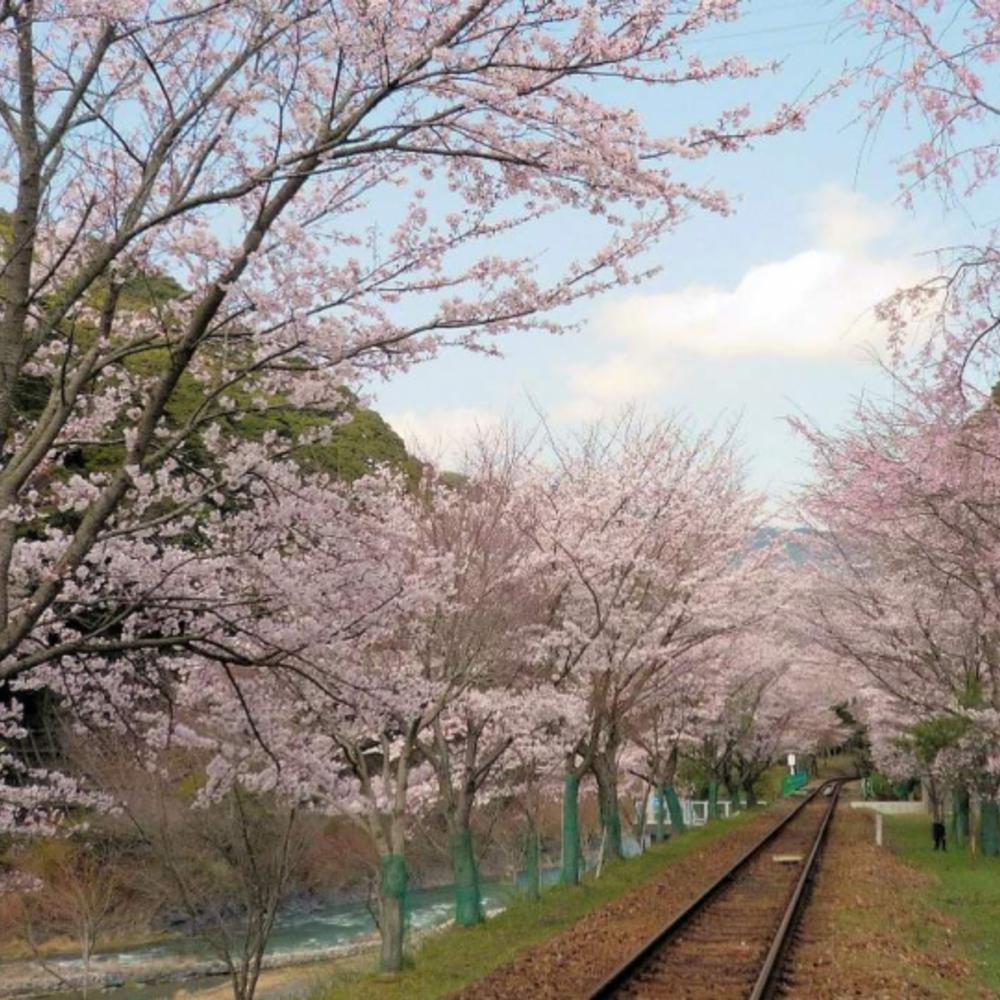 [일본]  교토  교토 사가노 토롯코 열차 티켓 사가 출발 - 카메오카 도착 (편도)