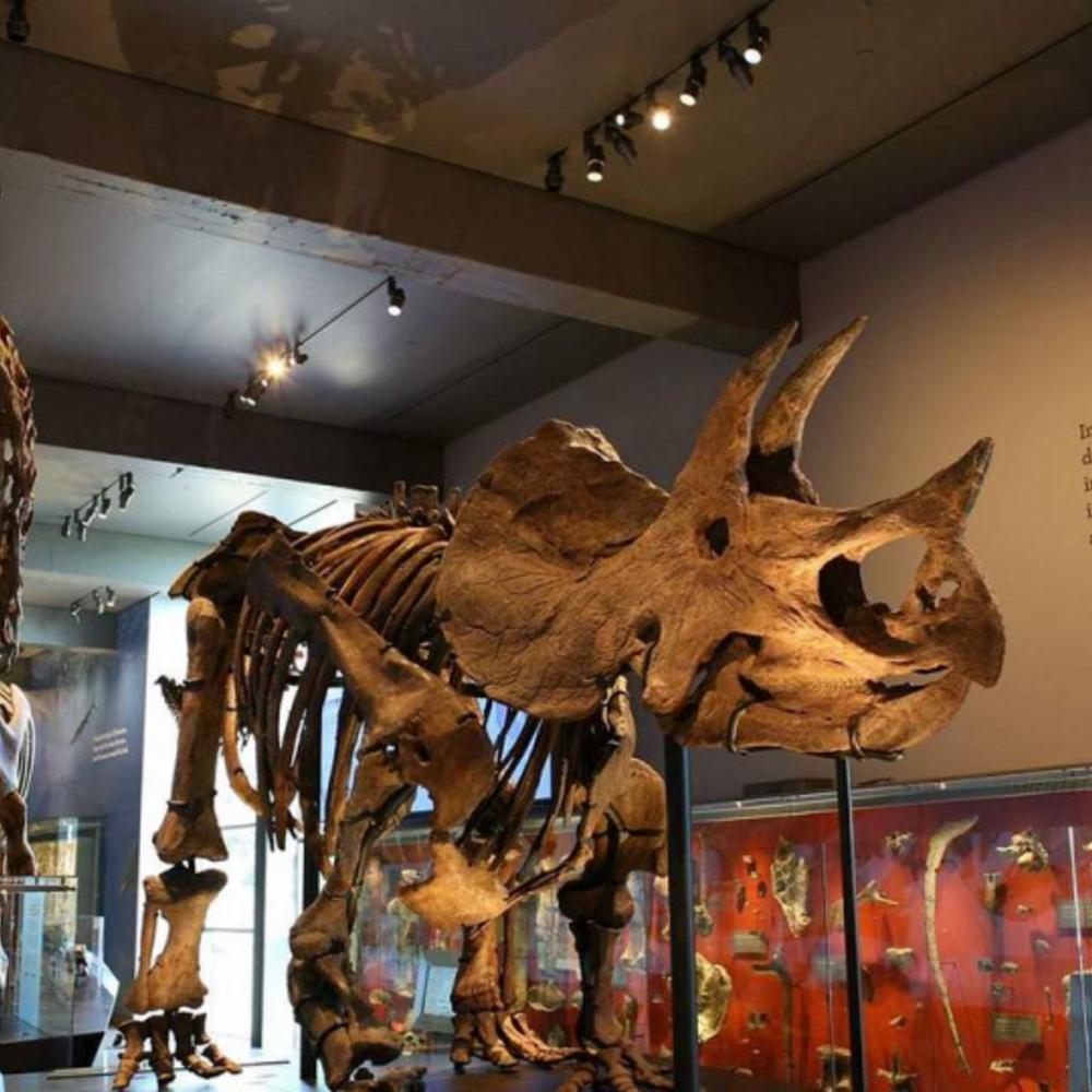 [미국]  로스앤젤레스  로스앤젤레스 자연사 박물관 입장권 입장권