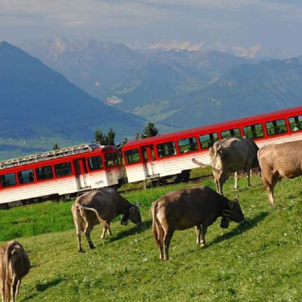 [스위스] |취리히| 리기산 투어 입장권
