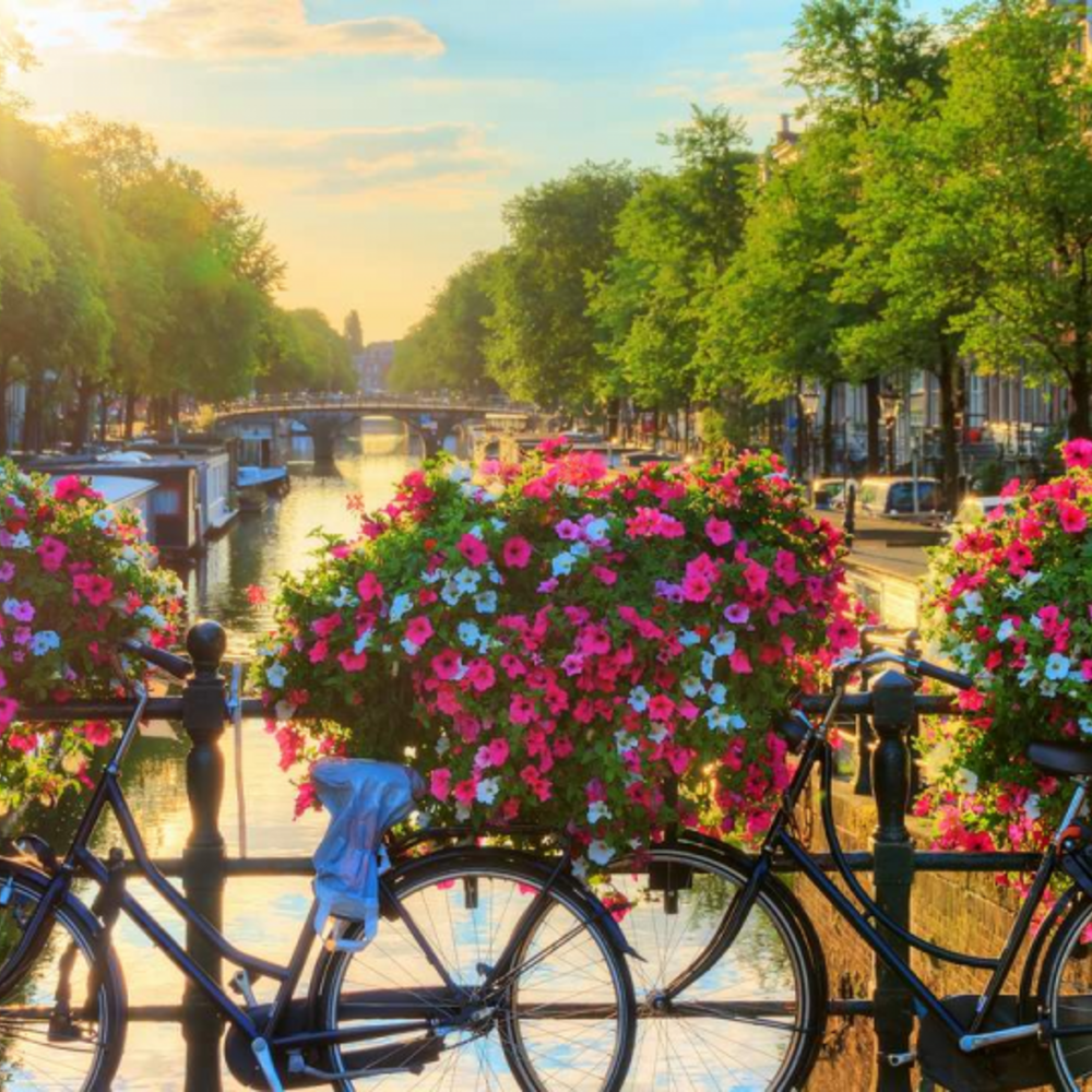 [네덜란드] |암스테르담| 암스테르담 하이라이트 크루즈 입장권