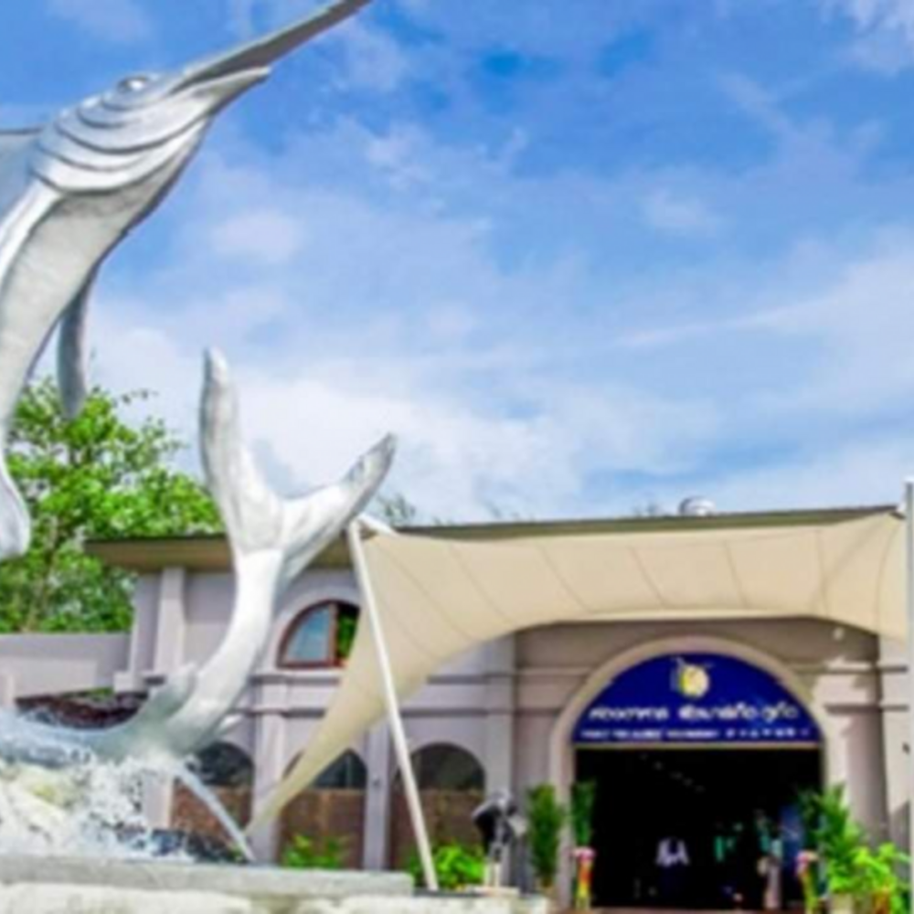 [태국] |푸켓| 아이벤처 푸켓 프리미엄 어트랙션 패스 2   + 5 스탠다드