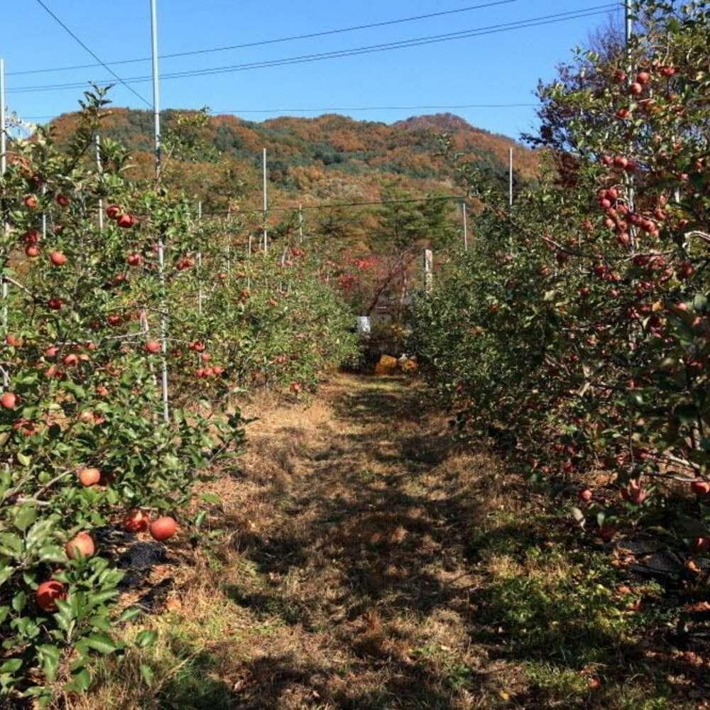 [가평군] 사과밭스테이