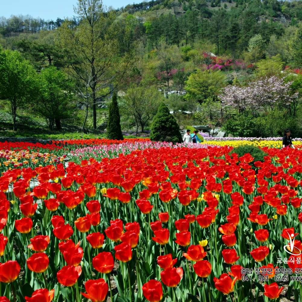 [충남] 지자체지원 청양 고운식물원 장곡사 천장호 출렁다리 국내 당일 여행