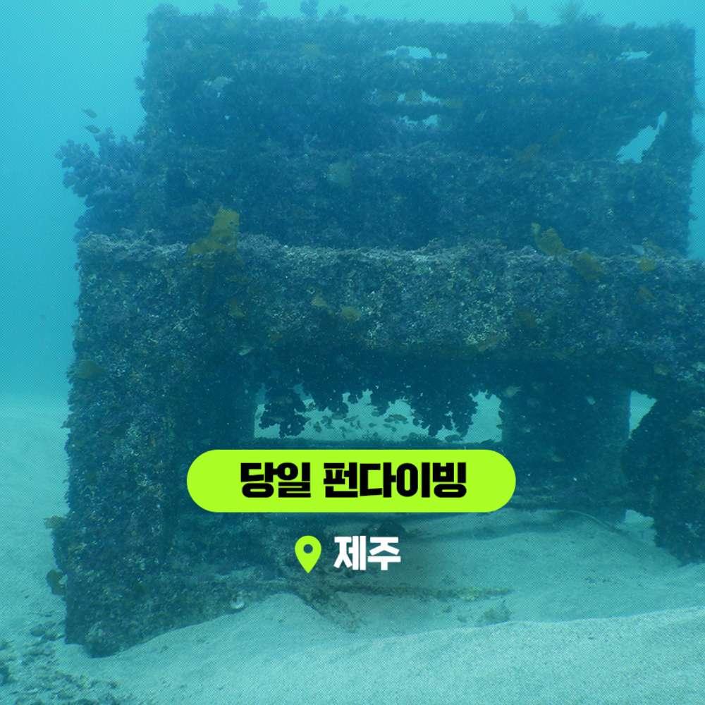 [제주] 1박1일 펀다이빙 패키지