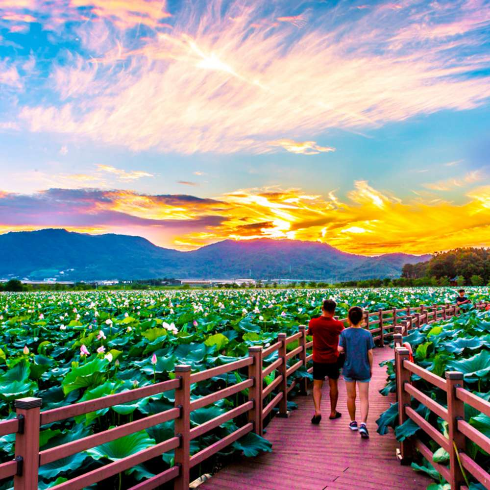 [경상] 8/22 연꽃이 아름다운 상주당일여행~중덕지자연생태공원+승마체험+상주곶감유통센터