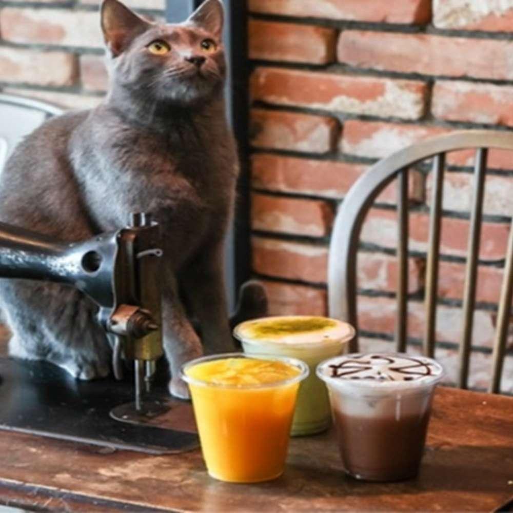 [대구] 양군멍군 애견카페 강아지 고양이 보드게임 카페 종일권 개덕후 냥덕후를 위한 곳