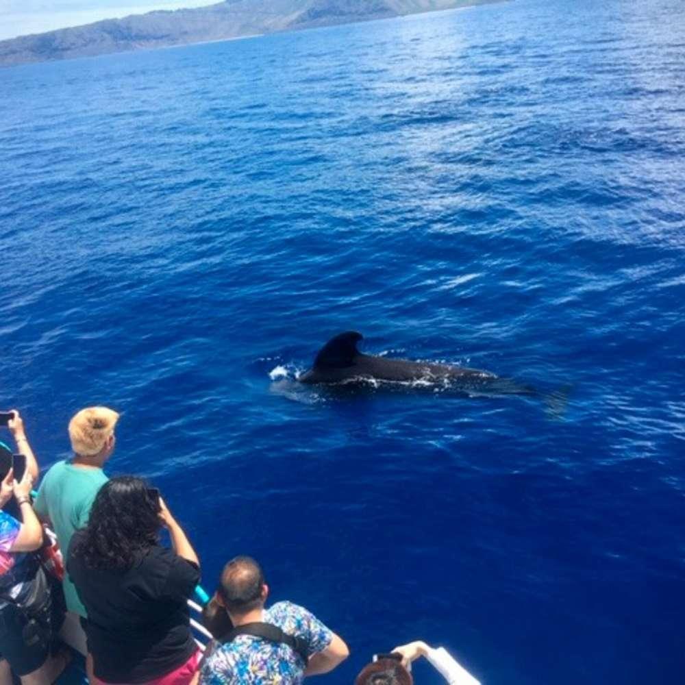 [하와이] 하와이 돌고래왓칭투어 돌핀스타크루즈