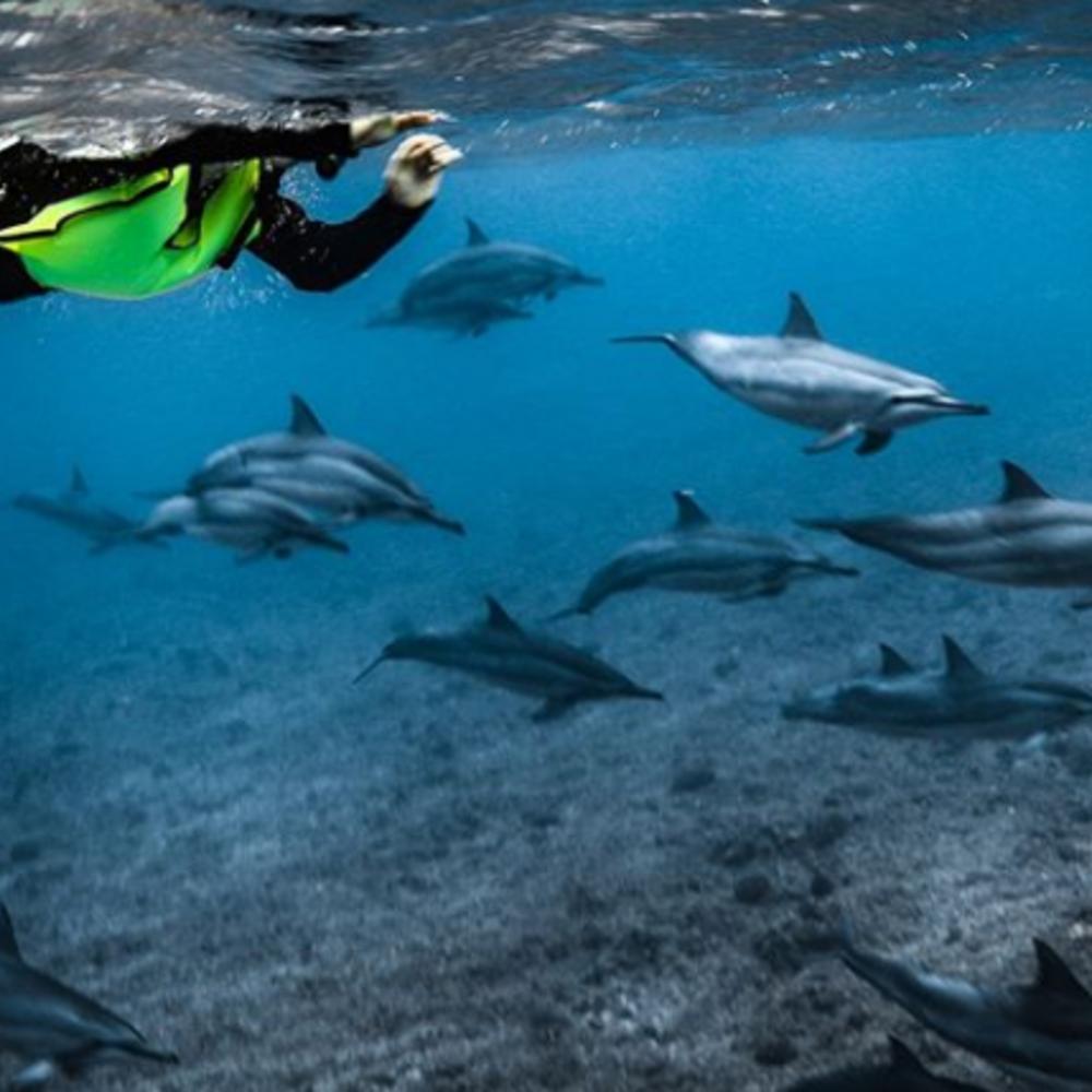 [[하와이]돌핀앤유] 하와이돌핀앤유스노클링+왕복셔틀