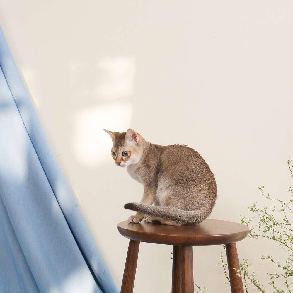 [홍대] 프롬엘라 강아지 고양이 프로필 사진 촬영권