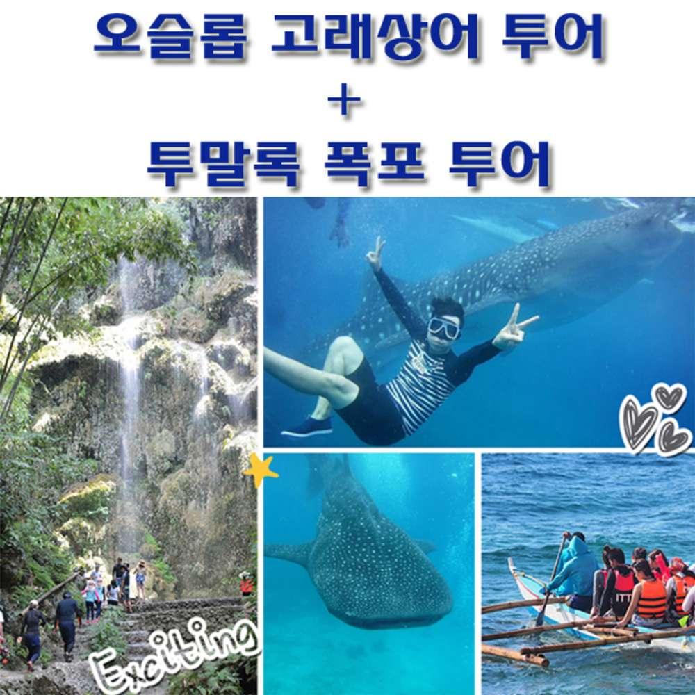 [세부막탄] 세부 어드벤처 오슬롭고래상어투어/바다속 사진촬영무료서비스/무료픽업드랍/사비포터여행서비스