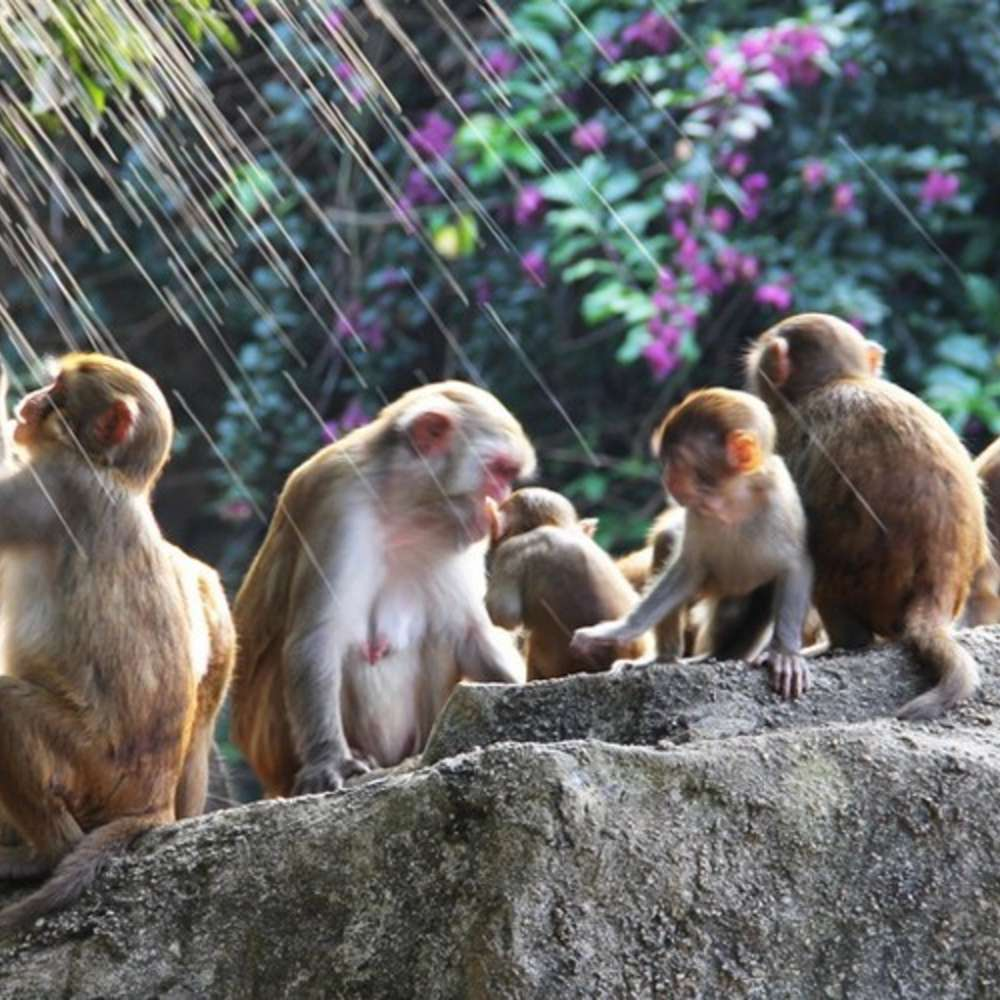 [하이난] 원숭이섬&송성가무쇼 데이투어