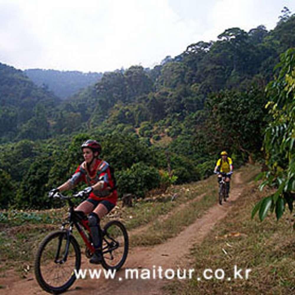 [치앙마이] 도이수텝 산악 자전거 트레킹 - Easy Course (Mountain Biking)