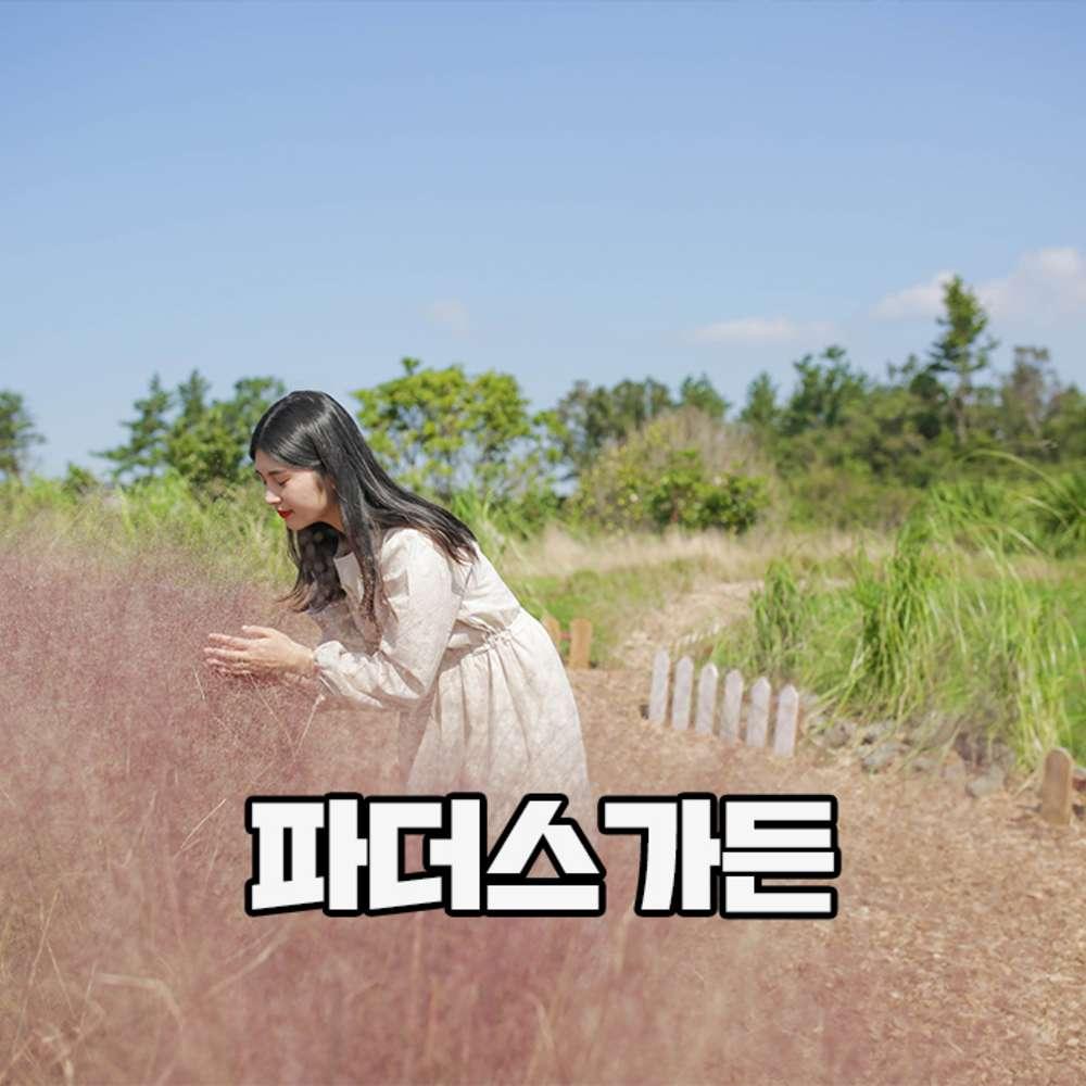 [제주] 파더스가든 (입장+핑크뮬리/팜파스축제+동물농장 체험)