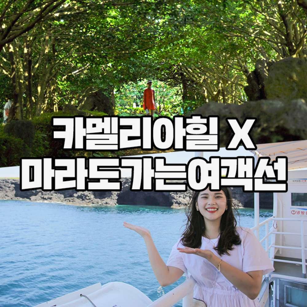 [제주] 마라도여객선+카멜리아힐