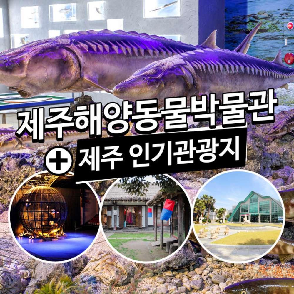 [제주] 제주해양동물박물관+인기관광지