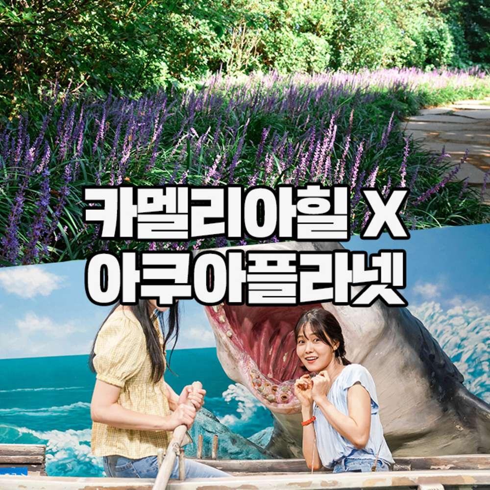 [제주] 아쿠아플라넷+카멜리아힐