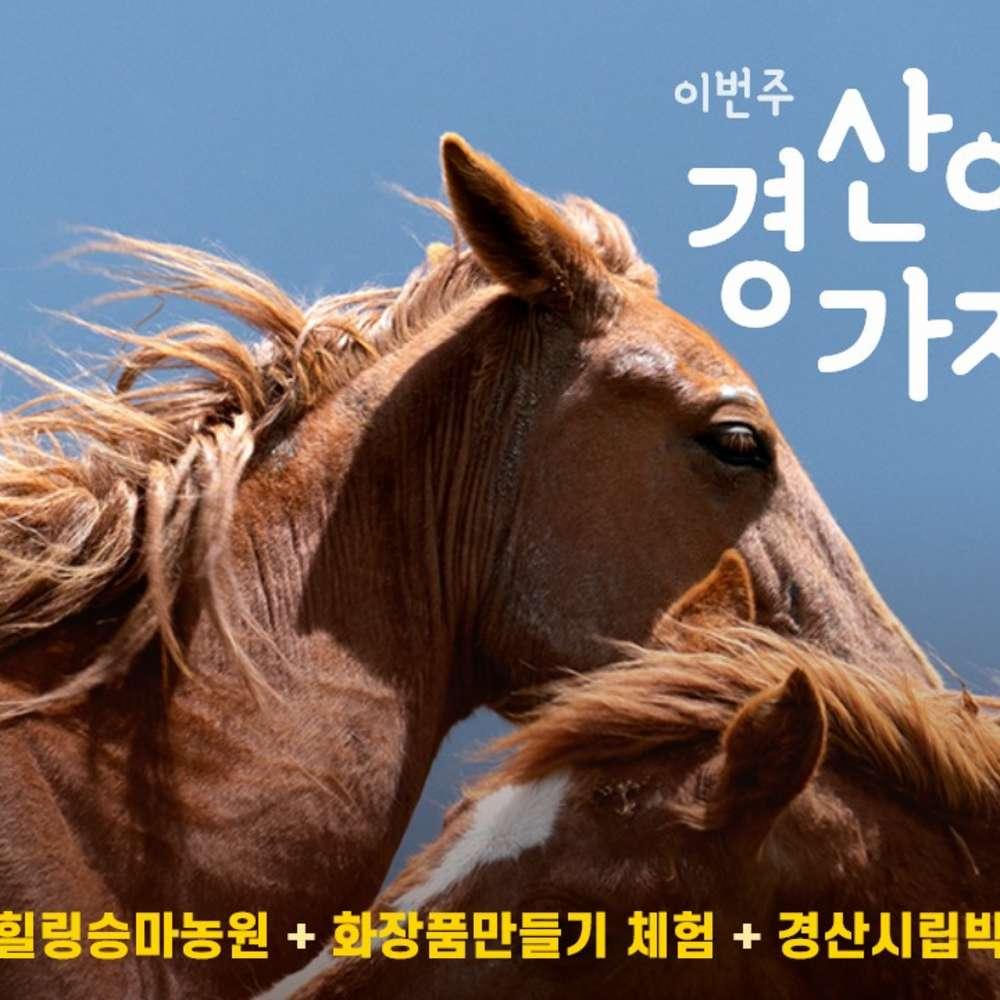 [경산] 경북나드리 경산(승마체험+마스크팩만들기+경산시립박물관)