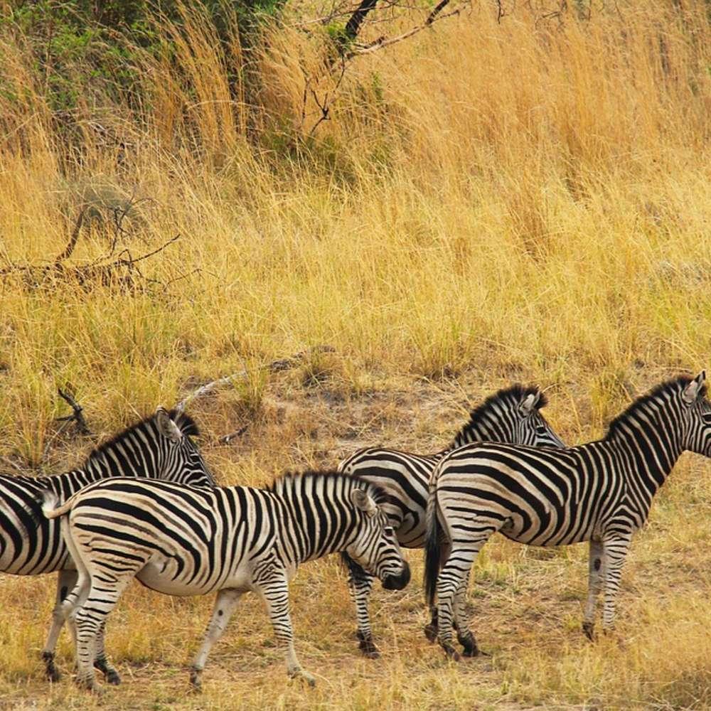 [아프리카/12일] 탄자니아와 케냐, 아프리카의 사파리를 제대로 경험하는 완벽한 아프리카! 대학생 강력추천!!