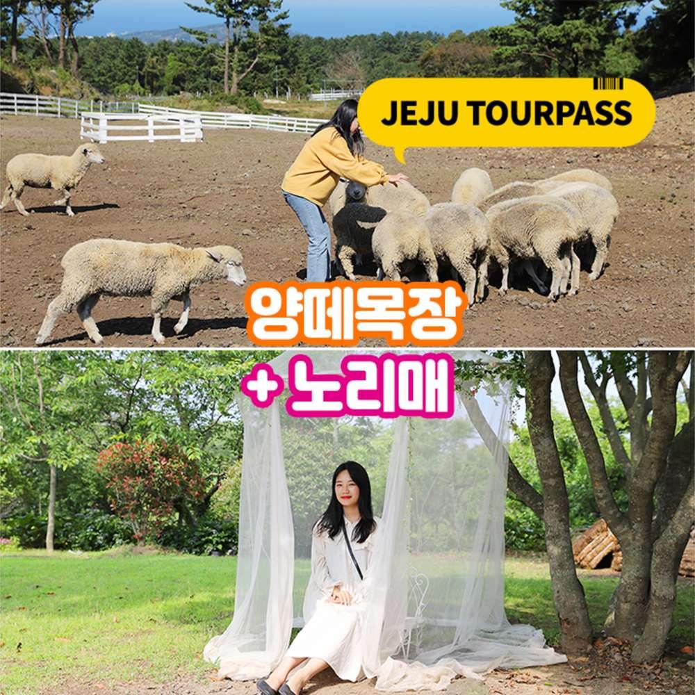 [제주] 양떼목장+노리매