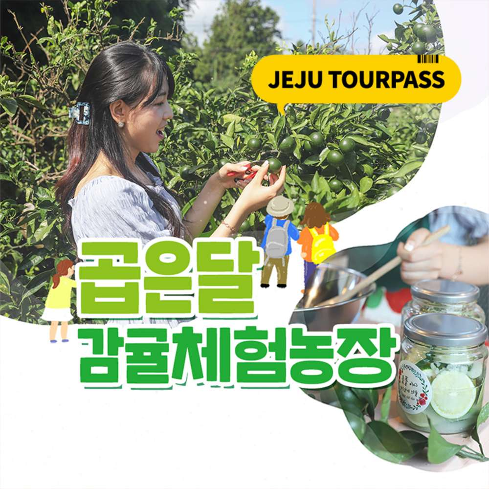 [제주] 곱은달감귤체험농장 청귤체험