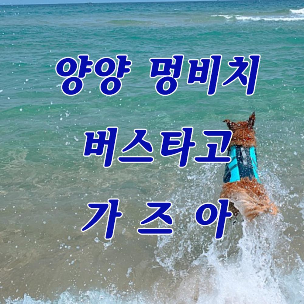 [양양] 반려인과 반려견의 동반 여행 멍비치 당일여행 버스타고 가즈아~