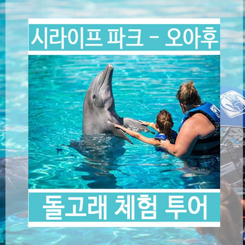 [하와이/오아후] 시라이프파크 돌고래 체험투어