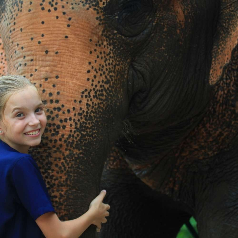 [치앙마이] 치앙마이 자유여행 반창 코끼리 공원 - 코끼리를 사랑하고 보살피는 맞춤형 프로그램