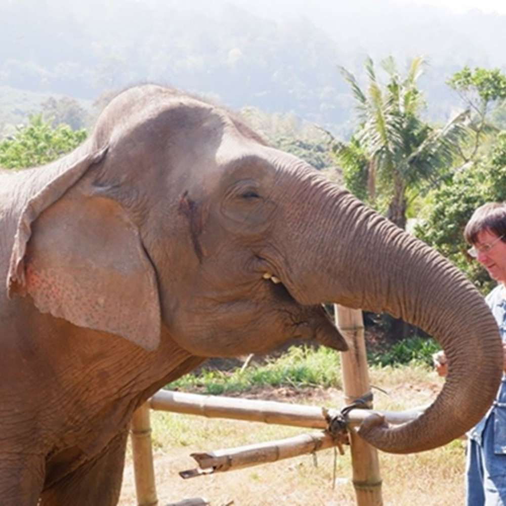 [치앙마이] 치앙마이 자유여행 에코 엘리펀트 케어 (치앙마이 코끼리 돌보기)