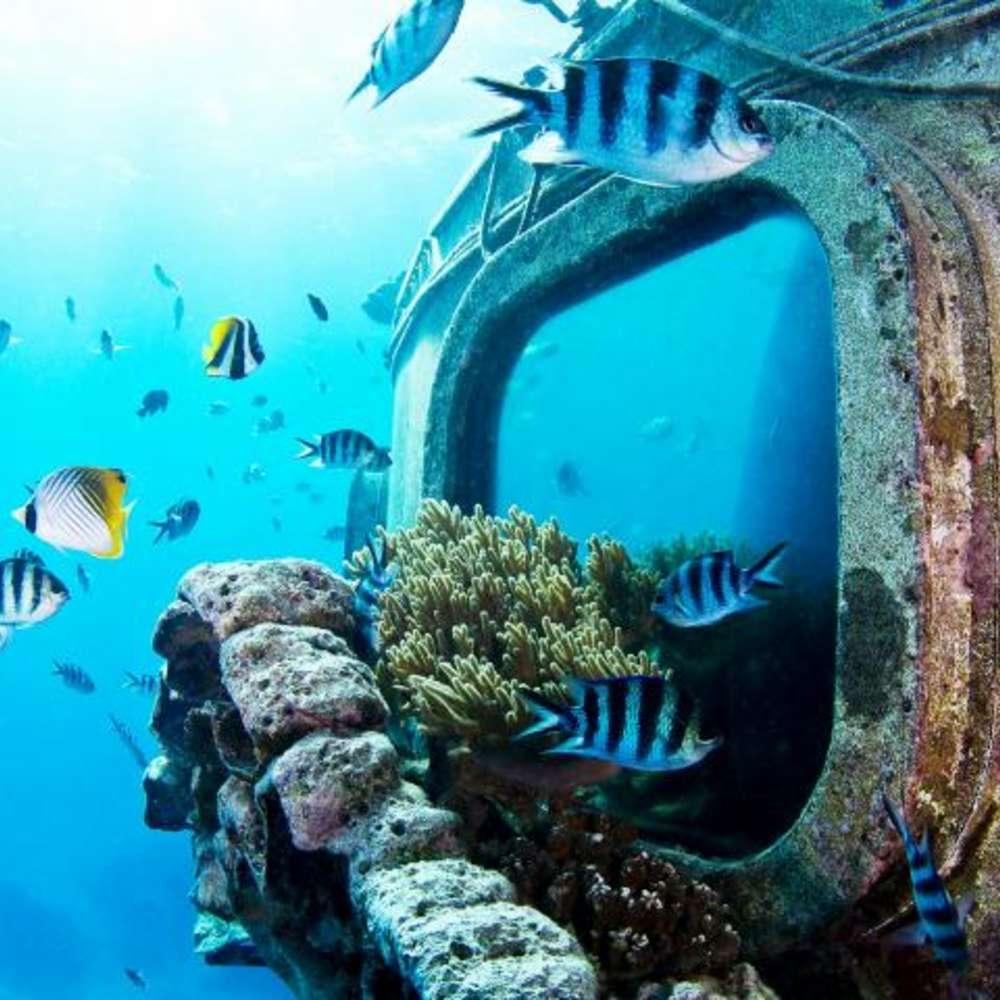 [괌] [벨트라] 피쉬아이 해중전망대 입장권/ 런치 뷔페 포함 선택 가능