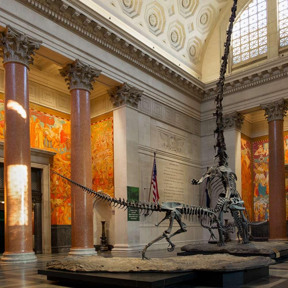 [뉴욕] 뉴욕 미국 자연사 박물관 입장권