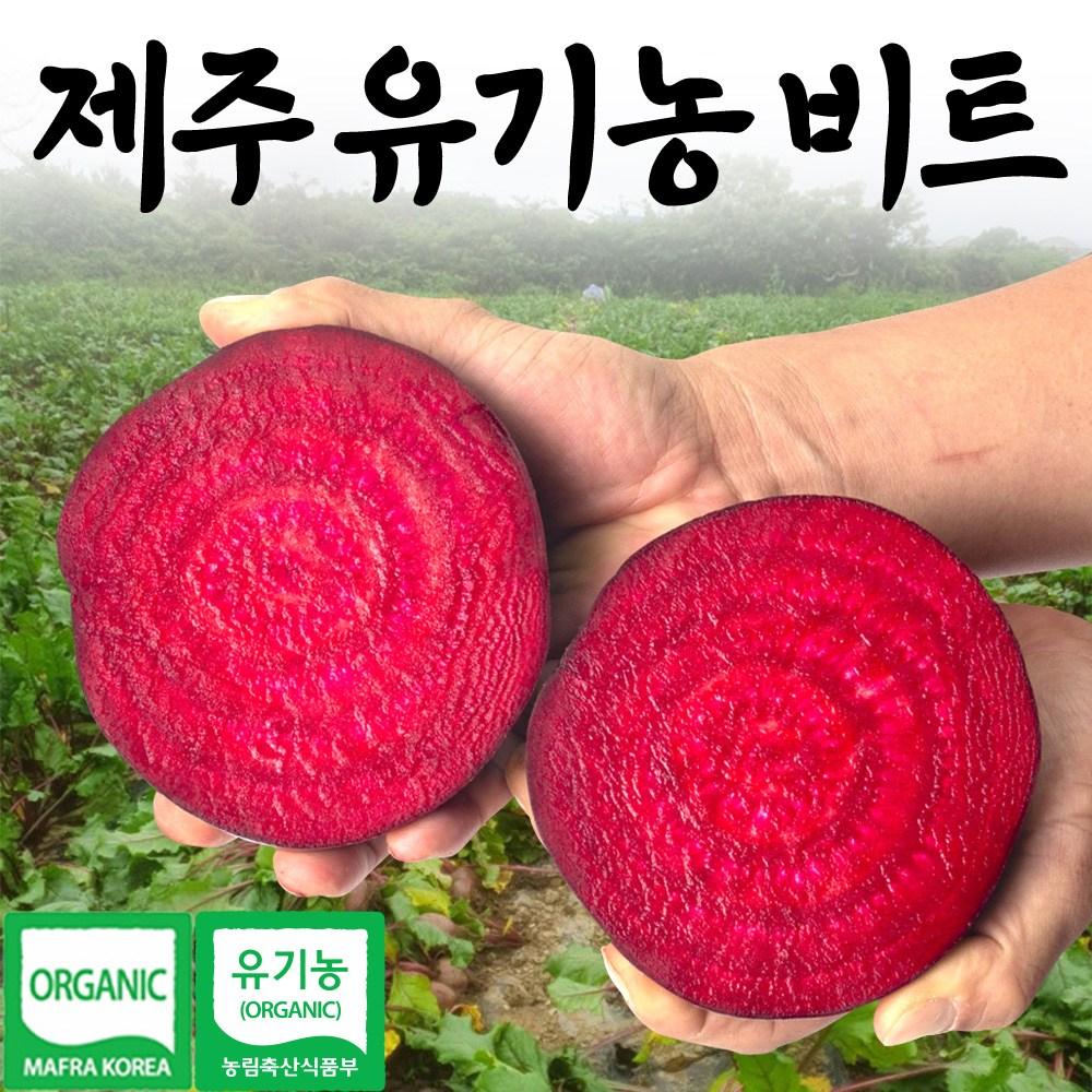 푸릇푸릇 제주 유기농 레드 비트 2kg 3kg 5kg 10kg 알 생비트 국산 물 김치, 유기농 알비트2kg