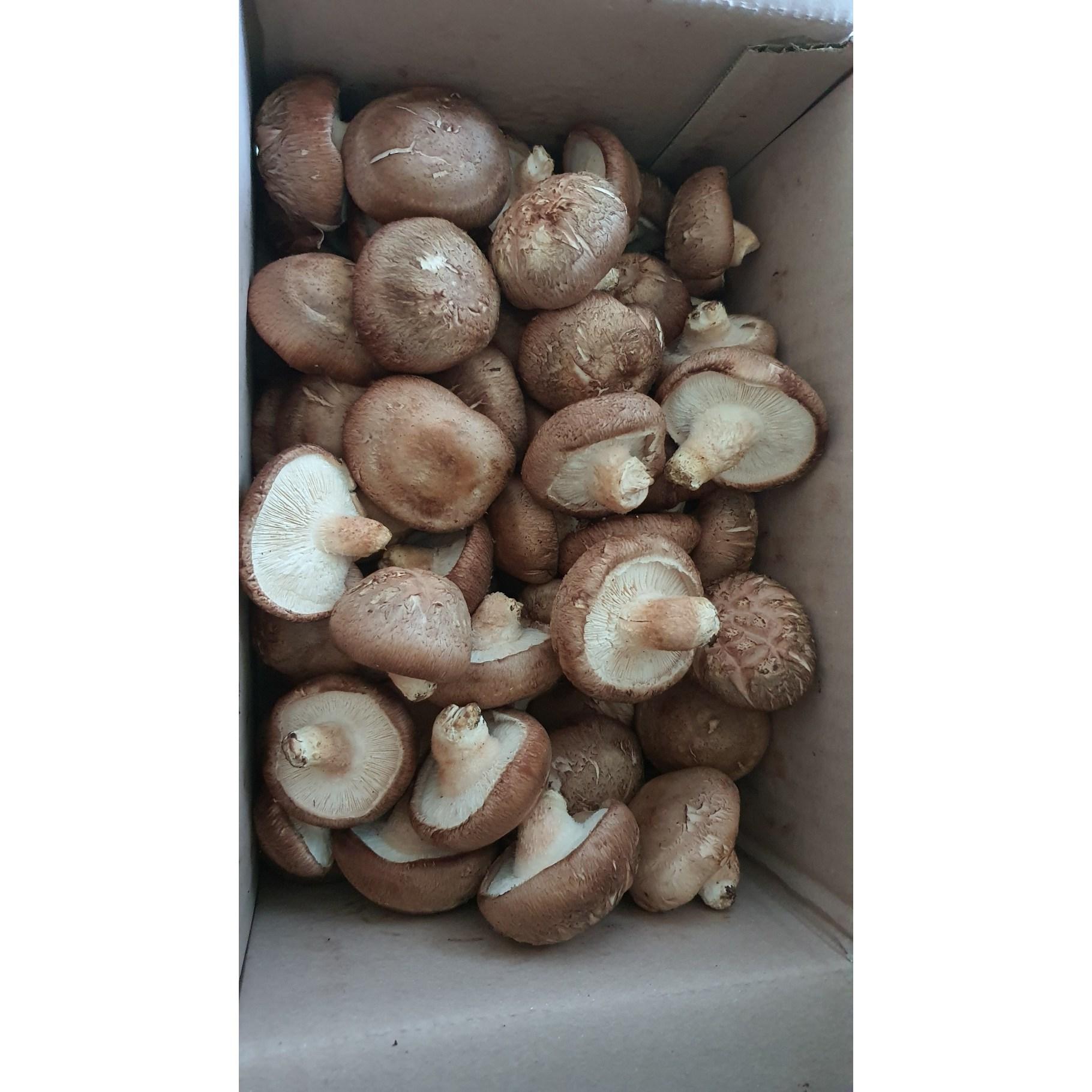 예산표고버섯 생표고버섯 못난이 5900원 1KG