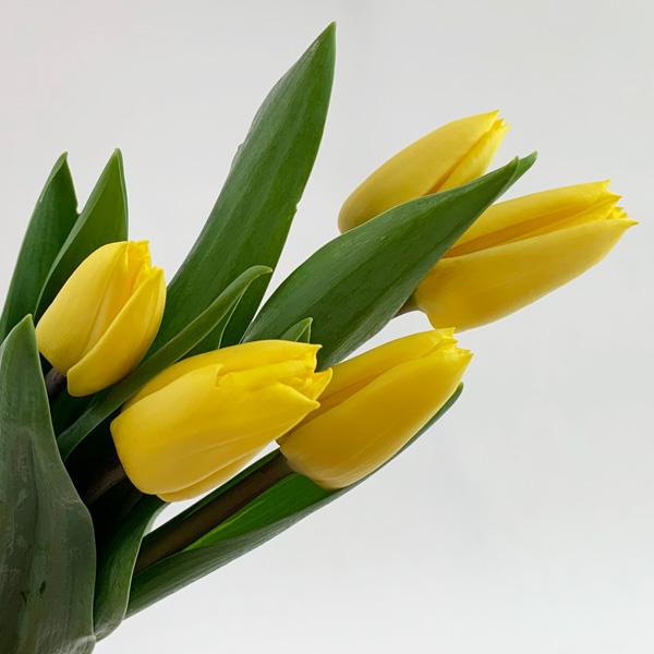 몬드플라워 노랑 옐로우 튤립 생화 5대 10대 꽃꽃이 인테리어 꽃 배달, 4-5송이