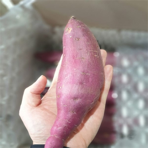 달콤달콤 황금호박~호박~고!구!마!, 4kg