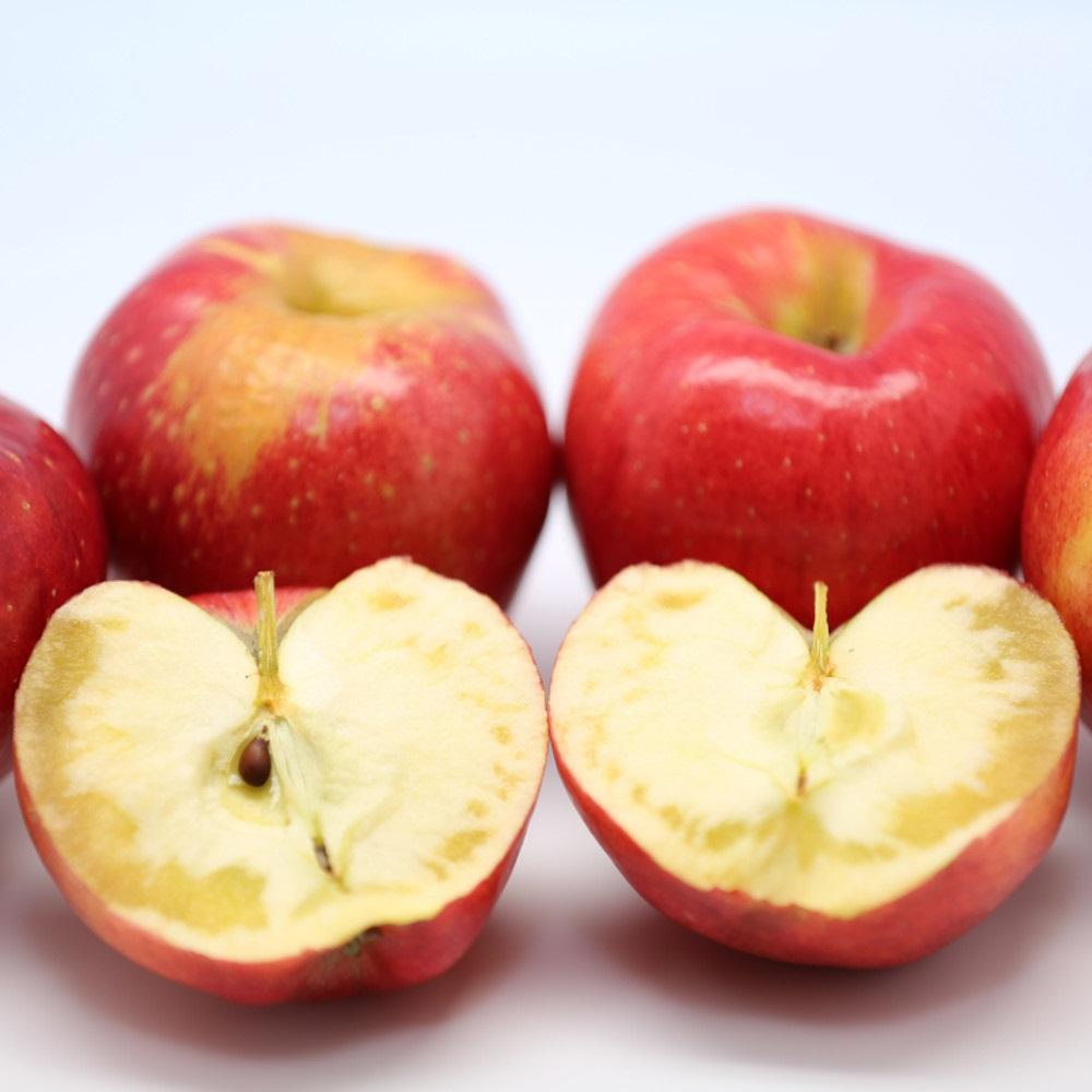 빨간 가을 홍로 부사 경북 청송 안동 영동 흠집 못난이 꿀 햇 가정용 사과 3kg 5kg, 간식(11~12과)