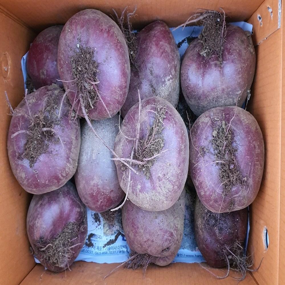 덤앤덤제주, 제주 햇레드비트 5kg(~10개내외)