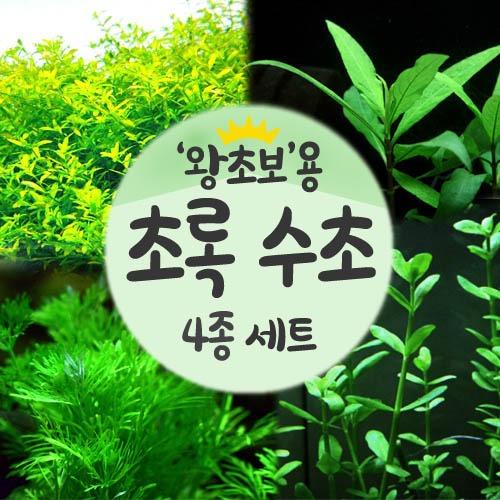 왕초보용 초록수초 4종세트