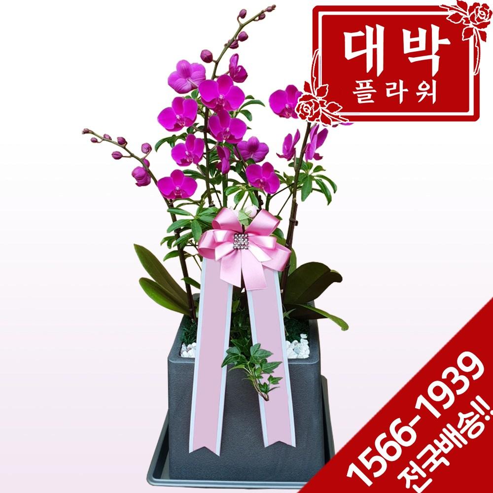 대박플라워 만천홍 서양란 승진선물 취임 영전 이전 개업선물 부모님선물 꽃배달