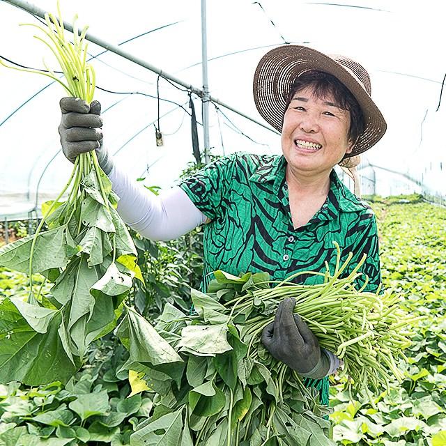 미스터팜팜 농장직송 나물 무농약 생고구마순 고구마줄기 1kg, 1개, 생고구마줄기 1kg