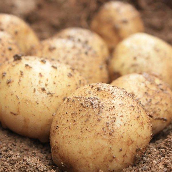 직거래농민장터 영양만점 감자 10kg 단골많은집 저장감자 싹있음, 1박스, 감자 5kg (통구이용)