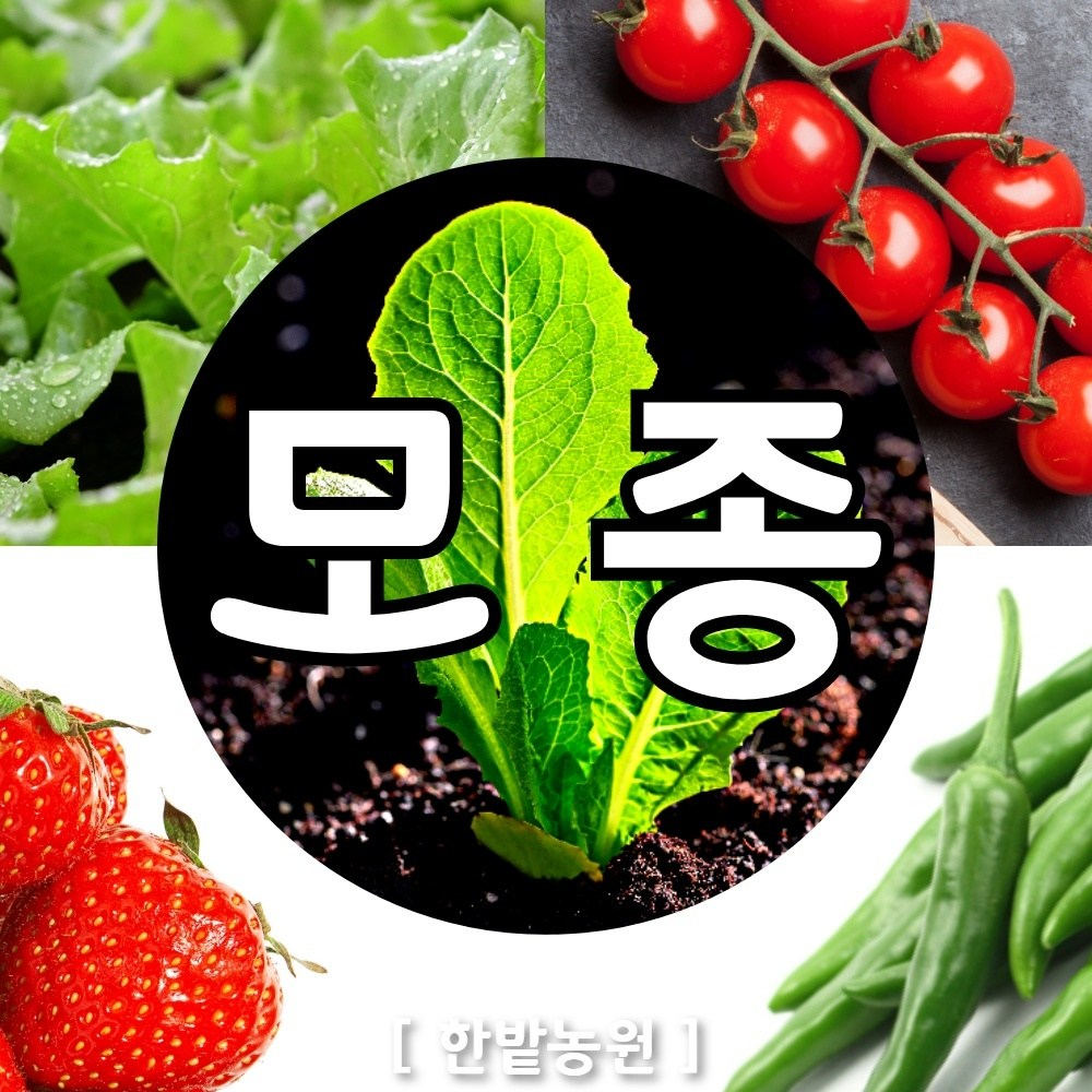 채소 모종 ~ 각종 묘종. 베란다 텃밭 세트 공기정화식물 허브 씨앗 채소모종 ~, H001 청상추 모종 6개