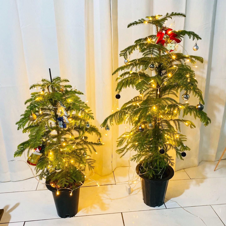 청년농부 아라우카리아 아레우카리아 크리스마스트리 트리식물 트리꾸미기, 대형
