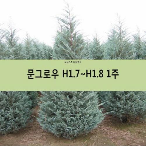 착한가격 나무생각 문그로우 모음, 문그로우 H1.7~1.8