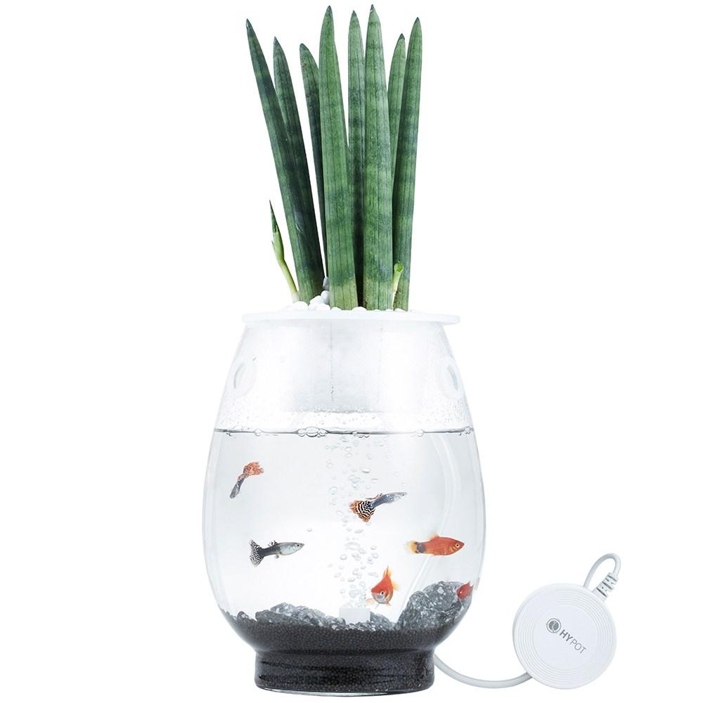 하이팟 겨울 천연가습기 거실인테리어 수경재배 수중 화분